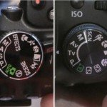 Optimal Camera Settings For Wildlife Photography